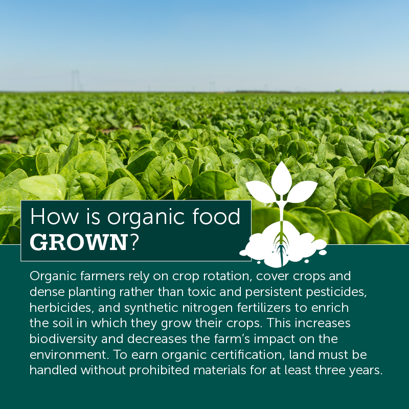 How Is Organic Food Grown